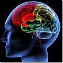 brain-anatomy-colored
