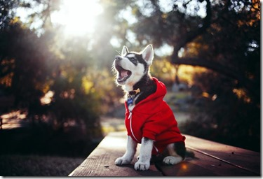 dogcloth