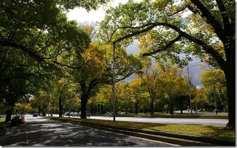 trees-melbourne