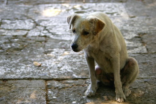 havana-street-dog1.jpg