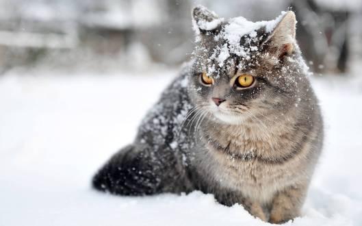 catsnoww