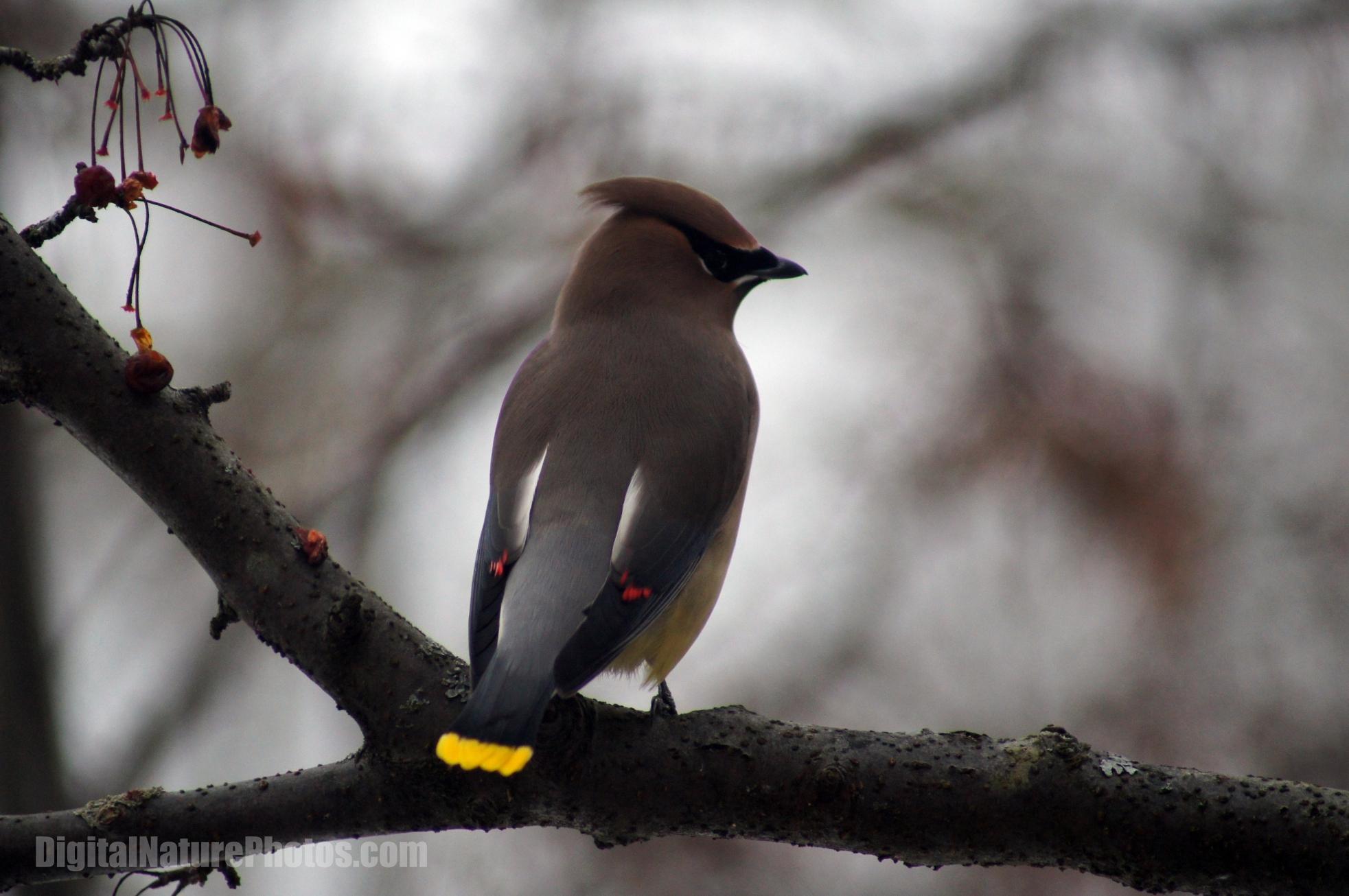 2013-Birds-0009SM.jpg