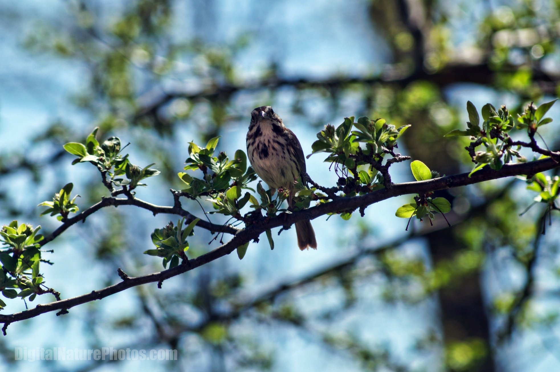 2013-Birds-0043SM.jpg