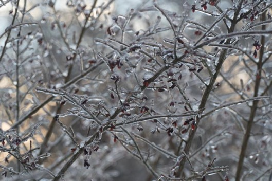 2017-Winter-02.jpg
