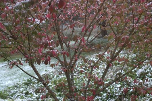 Winter-0001SM.jpg