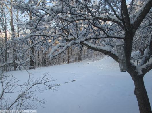 Winter-0013SM.jpg