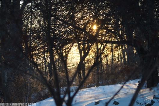 Winter-0022SM.jpg