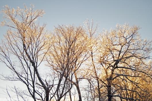Winter-0044SM.jpg