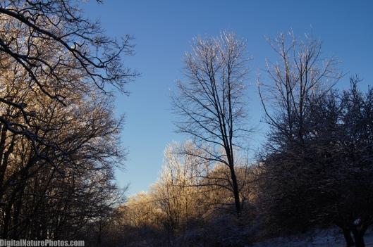 Winter-0059SM.jpg