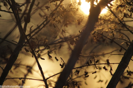 Winter-0063SM.jpg