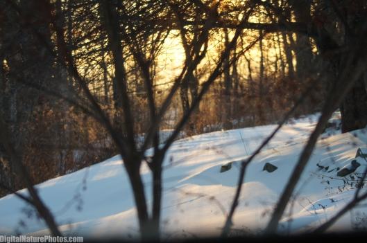 Winter-0079SM.jpg