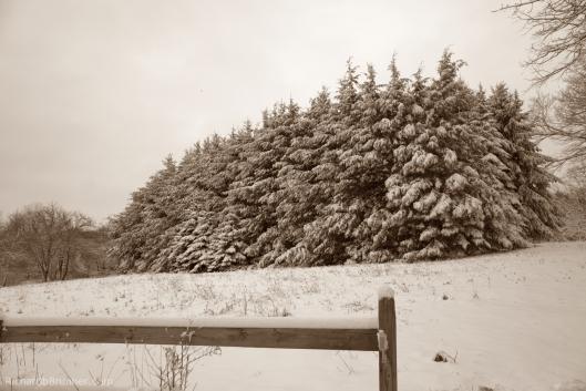 2017-Winter-63-sm.jpg