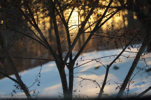 Winter-0073-sm.JPG