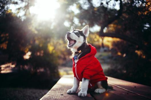 dogcloth.jpg