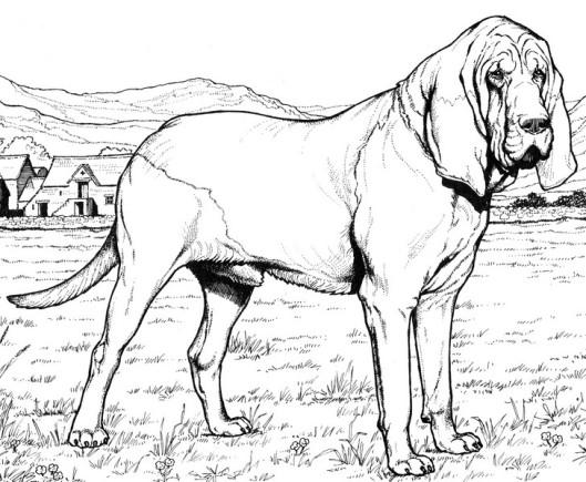 CPDG-Bloodhound-TR.jpg