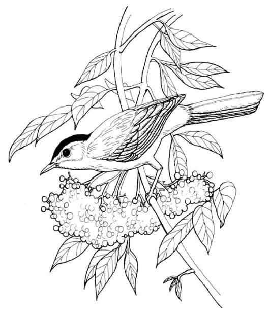 CPBD-Catbird-TR.jpg