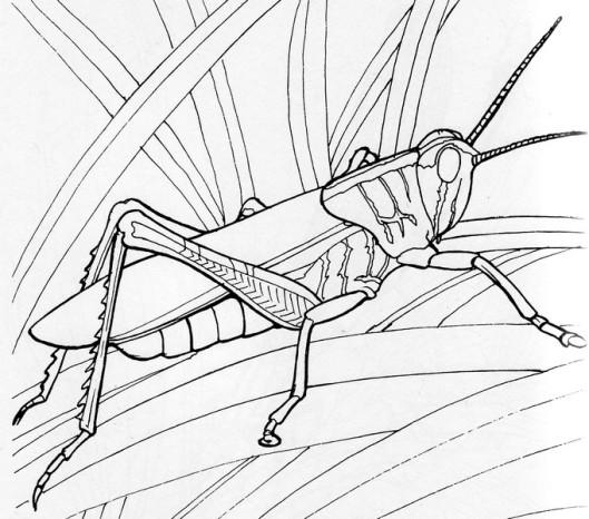 CPIT-Grasshopper-TR.jpg